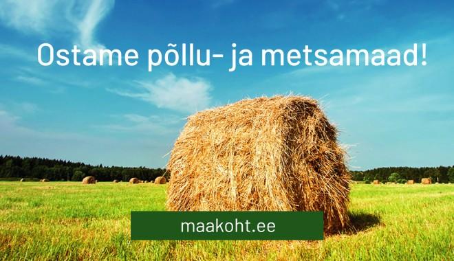 Maakoht_taust_kodukas